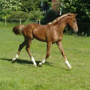 Leyland Daff 45 130 starting problem | Horse and Hound Forum